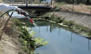 Ιός Δυτικού Νείλου: 153 κρούσματα και 17 θάνατοι – Έκτακτο σχέδιο δράσης ζητά ο ΙΣΑ
