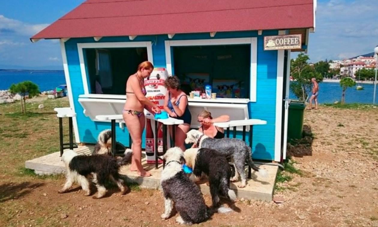 Σκυλίσια ζωή… σε beach bar στην Κροατία!
