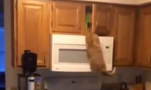 Η γάτα την είδε… Spiderman! (vid)