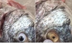 Απίστευτος ιδιοκτήτης εστιατορίου: Κολλούσε ψεύτικα πλαστικά μάτια στα ψάρια για να φαίνονται φρέσκα