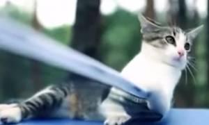 Έχετε δεί γάτα να παίζει πινγκ πονγκ; (vid)
