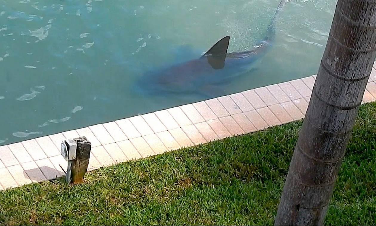 Μεγάλος καρχαρίας βγήκε στα ρηχά προκαλώντας πανικό (vid)
