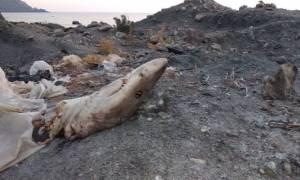 Εικόνες ντροπής στα Χανιά! Παράνομη χωματερή λίγα μέτρα από την παραλία (pics)