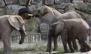 Στα «λευκά» η Νότια Αφρική: Ελέφαντες και καμηλοπαρδάλεις μέσα στο χιόνι!