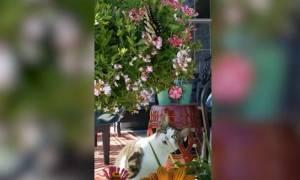 Όταν η ομορφιά της φύσης μαγεύει ακόμα και τις... γάτες! (vid)