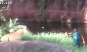 Μεθυσμένος άντρας πέφτει στο κλουβί με τα λιοντάρια και η συνέχεια είναι… αδιανόητη! (vid)