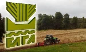 Βασική ενίσχυση: Έως τις 26/10 θα γίνει η πληρωμή του 70% στους αγρότες