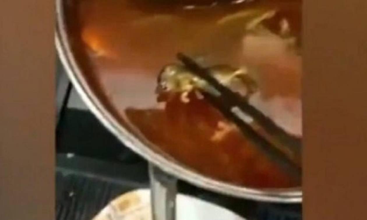 Νεκρός αρουραίος επιπλέει σε σούπα, εστιατόριο παθαίνει ζημιά εκατοντάδων εκατομμυρίων (vid)