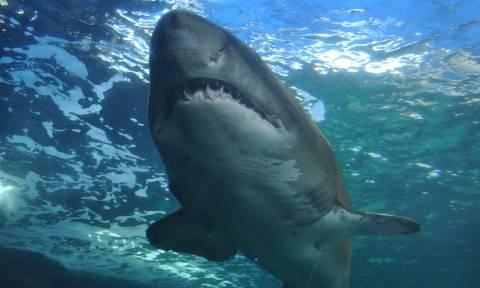 ΣΟΚ στις ΗΠΑ: Καρχαρίας σκότωσε σέρφερ μπροστά στα μάτια των λουόμενων