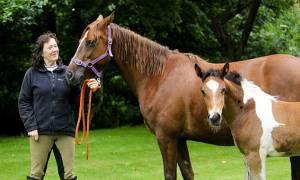Απίστευτο: Δείτε με τι γεννήθηκε αυτό το άλογο στην πλάτη! (pics+vid)