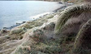 Λύθηκε το μυστήριο με το τεράστιο πέπλο αράχνης στο Αιτωλικό – Αυτή είναι η αιτία (pics)