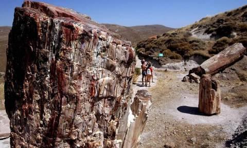 Μυτιλήνη: Αθώος ο διευθυντής του μουσείου απολιθωμένου δάσους για το θάνατο βρετανίδας επισκέπτριας