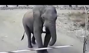 Ελέφαντας «μπούκαρε» σε στρατόπεδο για... επιθεώρηση χωρίς να κάνει καμία ζημιά (vid)