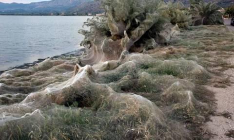 Один из греческих пляжей накрыла гигантская паутина