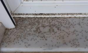 Eικόνες από ταινία θρίλερ στο Αιτωλικό: Το πέπλο αράχνης «κατάπιε» και σπίτια (pics+video)