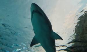Αυστραλία: Καρχαρίας επιτέθηκε σε 12χρονο κοριτσάκι