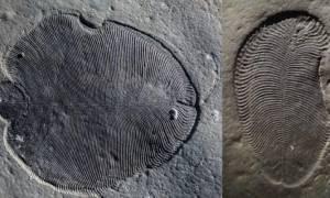 Ανακάλυψαν το αρχαιότερο λίπος στην Ιστορία και ανήκει σε ένα πολύ παράξενο πλάσμα! (vid+pics)