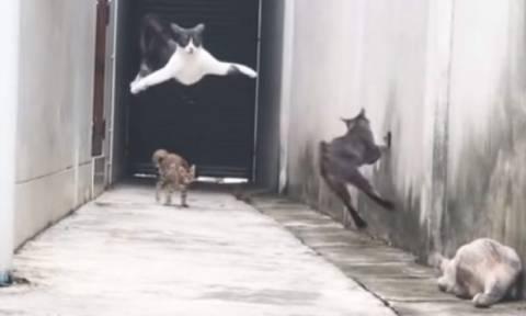 Τρελά γέλια με «δαιμονισμένο» γατί που γίνεται… Μπάτμαν για να ξεφύγει από τους διώκτες του (vid)