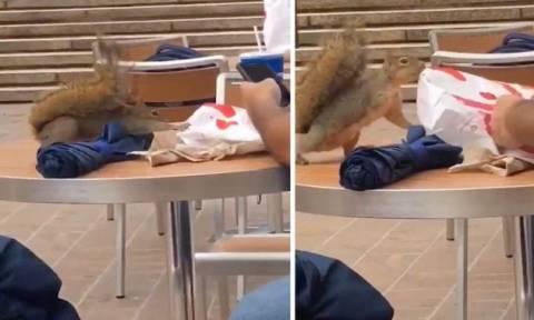 Σκίουρος δίνει μάχη για μία μπουκιά από fast food (vid)