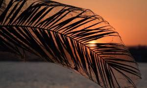 Viral: Το εντυπωσιακό ηλιοβασίλεμα με τους ιστούς αράχνης στο Αιτωλικό (pics)