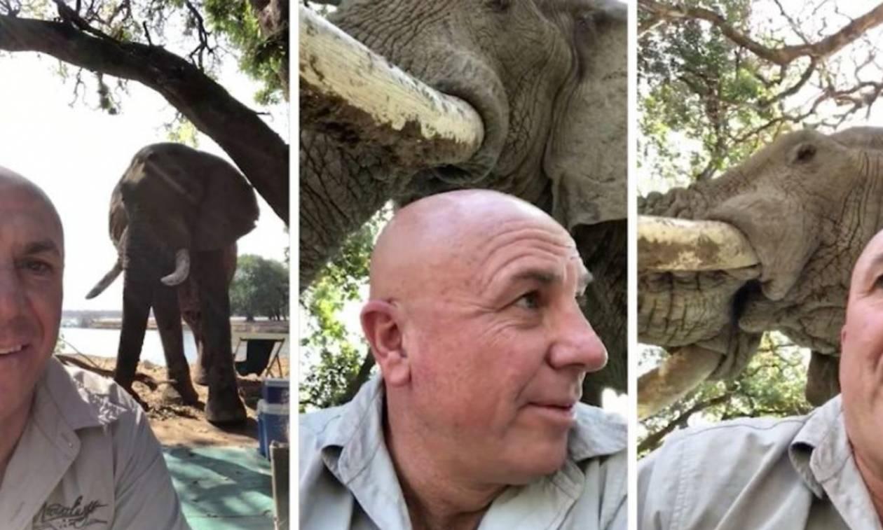 Ελέφαντας πήγε για... πικ νικ (vid)