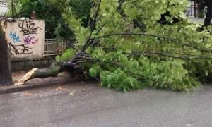 Κακοκαιρία Αττική: Έκλεισε η «Αλεξάνδρας» από πτώση δέντρου - Δεκάδες κλήσεις στην Πυροσβεστική