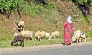 Τρίκαλα: Γυναίκα βοσκός έπαθε ΣΟΚ όταν είδε μπροστά της αυτό το ΘΗΡΙΟ και έκανε ένα τρομερό λάθος!