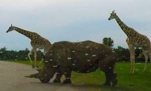 Εκαναν τη βόλτα τους στην άγρια... φύση όταν ξαφνικά είδαν μπροστά τους (video)