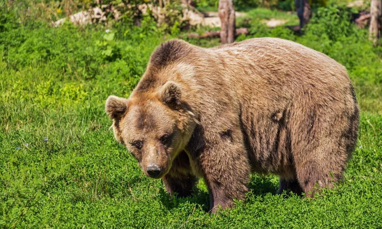 Κυνηγός πυροβόλησε αρκούδα και... κατέληξε ο ίδιος στο νοσοκομείο