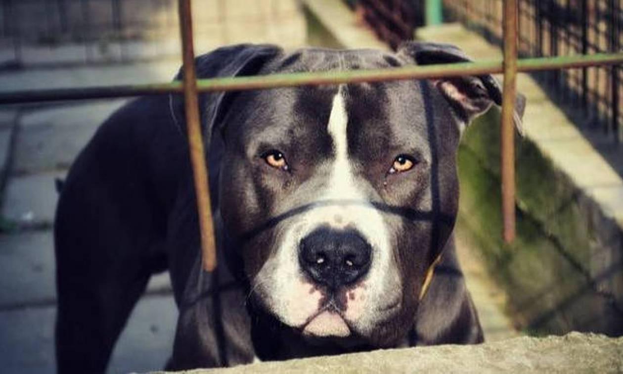 Ρόδος: 33χρονος κατήγγειλε ότι δέχθηκε επίθεση από σκύλο