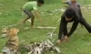 Απίστευτο θάρρος: Μαθητές τα βάζουν με τεράστιο φίδι για να σώσουν το σκυλί τους! (vid)