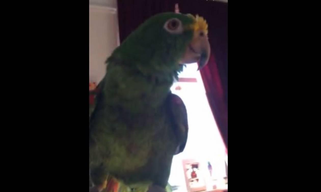 Ο πιο ταλαντούχος παπαγάλος (vid)