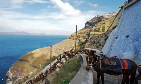 В Греции туристам с лишним весом запретили кататься на осликах