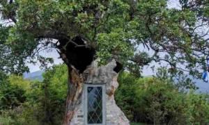 Αυτό το εκκλησάκι προς τιμήν του Αγίου Παΐσιου χτίστηκε μέσα σε δέντρο 300 ετών!