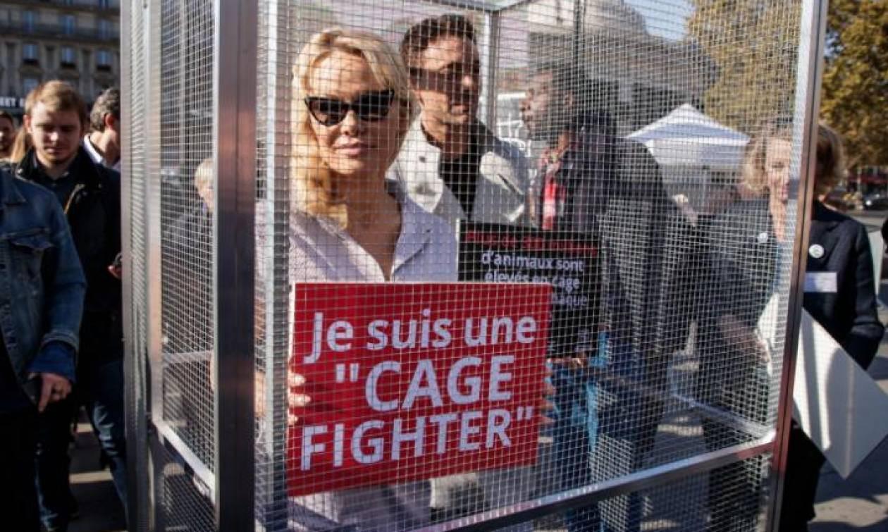 Τι κάνει η Pamela Anderson μέσα στο κλουβί;