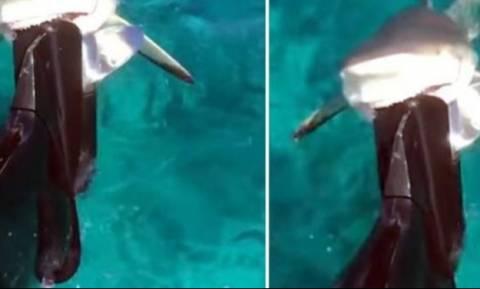 Φρίκη! Λυσσασμένος καρχαρίας ορμάει σε βάρκα και δαγκώνει σαν να μην υπάρχει αύριο! (vid)