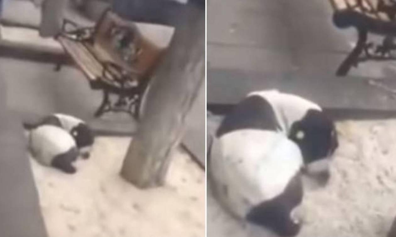 Βίντεο που «σπάει» καρδιές: 62χρονος βρίσκει το χαμένο σκύλο του μετά από 3 χρόνια