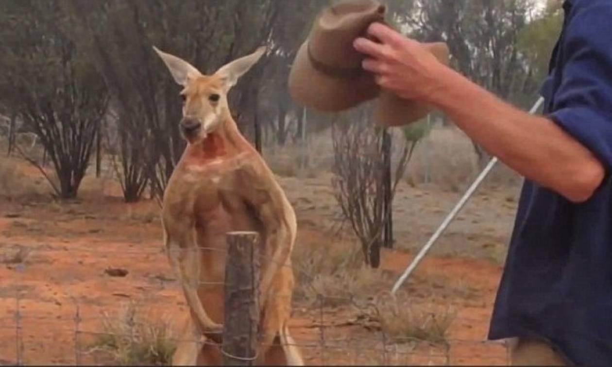 Αφηνιασμένο καγκουρό έσπειρε τον τρόμο σε χωριό της Αυστραλίας – Τουλάχιστον τρεις τραυματίες