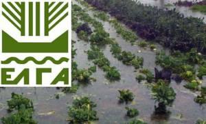 ΕΛΓΑ: Σήμερα (16/10) η καταβολή των ενισχύσεων προς τους πλημμυροπαθείς αγρότες