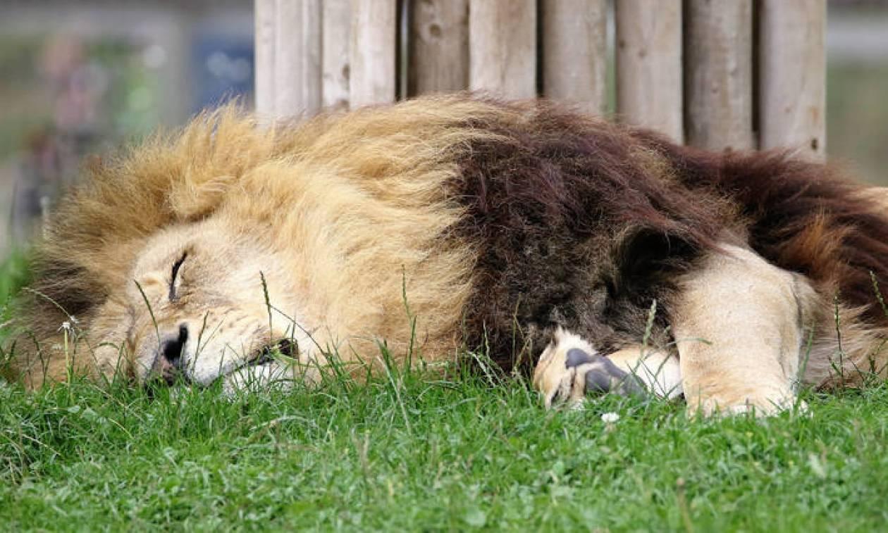 Οργή για τον κυνηγό που σκότωσε δεκάδες άγρια ζώα στην Αφρική για να βγάλει selfies