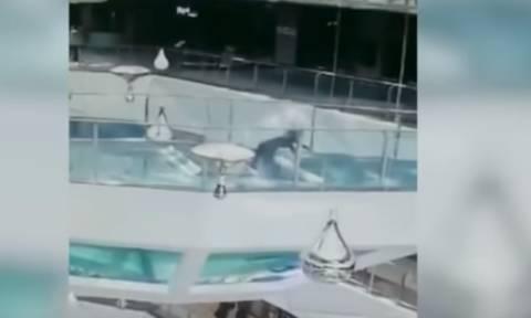 Τρόμος στο νερό: Γυναίκα έπεσε σε δεξαμενή γεμάτη καρχαρίες την ώρα που τους τάιζαν (video)
