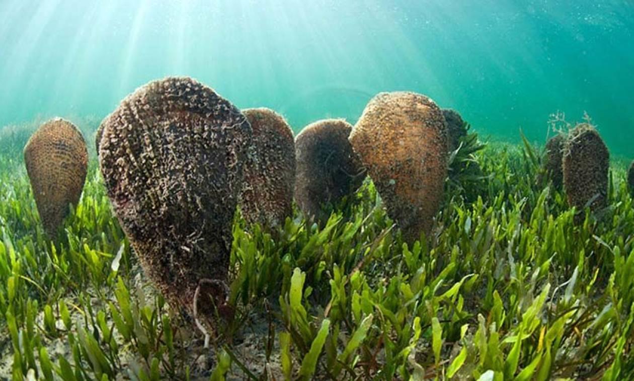 Κινδυνεύουν με εξαφάνιση! Συναγερμός για σοβαρή απειλή στις ελληνικές θάλασσες