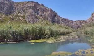 «Περπατήστε» το Φοινικόδασος του Πρέβελη μέσα από ένα σούπερ βίντεο!