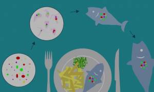 Έρευνα σοκ αποδεικνύει ότι όλοι τρώμε... πλαστικό!