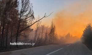 Συναγερμός στη Χαλκιδική: Ανεξέλεγκτη η φωτιά στη Σιθωνία (pics+vid)