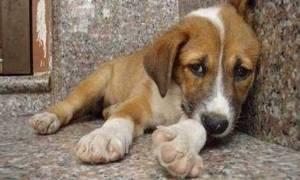 Τοποθέτησαν κρυφή κάμερα σε αδέσποτο σκύλο - Αυτό που είδαν ραγίζει καρδιές... (video)