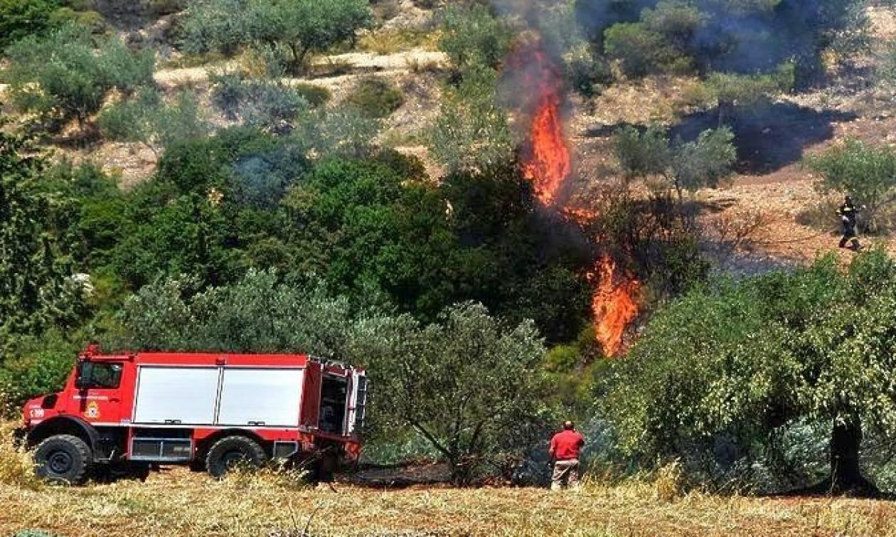 Στις φλόγες η Κρήτη: 556 οι αγροτοδασικές πυρκαγιές από την αρχή του 2018