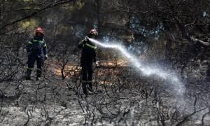 Μυτιλήνη: Μεγάλη πυρκαγιά στην περιοχή Καμένο Δάσος