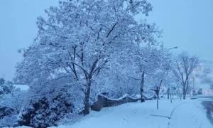 Καιρός: Μέχρι και το 1.5 μέτρο το ύψος του χιονιού που θα πέσει στα βουνά (gif)