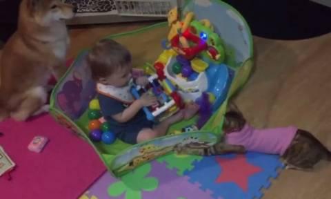 Μωρό βρήκε ήδη τους καλύτερούς του φίλους (vid)